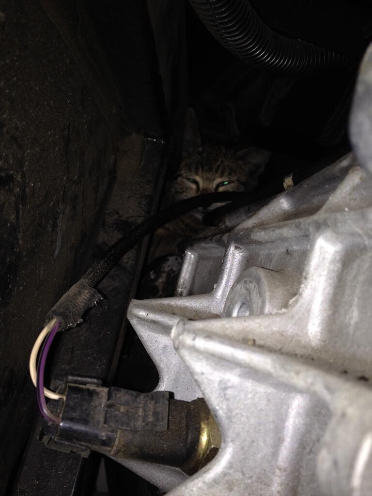 soe_kitty_in_the_car